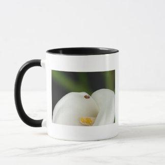 オランダカイウユリのマグのてんとう虫 マグカップ