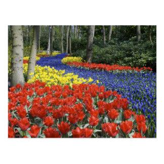 オランダ、オランダ、LisseのKeukenhofの庭 ポストカード