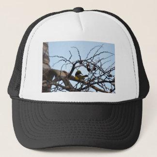 オリーブによって支持される鳥田園クイーンズランドオーストラリア キャップ