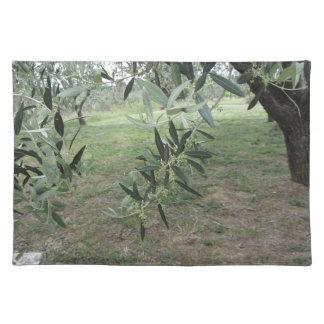 オリーブは最初芽タスカニー、イタリアによって分岐します ランチョンマット