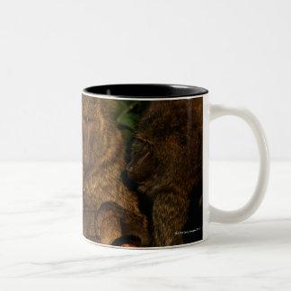 オリーブ色のヒヒ(Papioのanubis)の監視のグループ、 ツートーンマグカップ