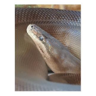オリーブ色の大蛇 ポストカード