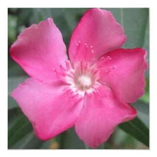 オレアンダーのピンクの花 カード