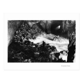 オレゴンの海岸のアシカは内部の眺めに洞窟を作ります はがき
