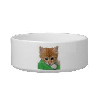 オレンジおよび白い子ネコ猫のペットボウル ボウル