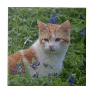 オレンジおよび白い虎猫 タイル