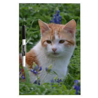 オレンジおよび白い虎猫 ホワイトボード