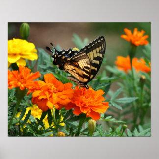 オレンジおよび黄色の花ポスターの蝶 ポスター