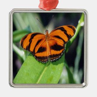 オレンジによってバンドを付けられる蝶.jpg メタルオーナメント