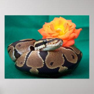 オレンジのバラの緑の背部が付いている球の大蛇の写真 ポスター