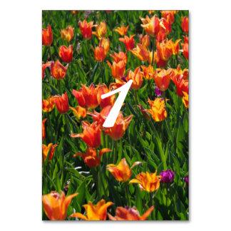 オレンジの庭 カード