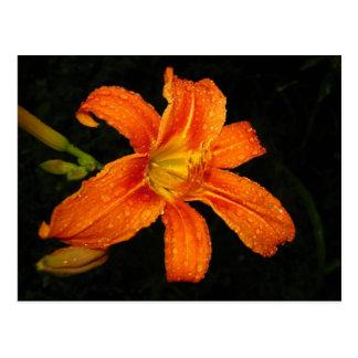 オレンジオニユリの花 ポストカード