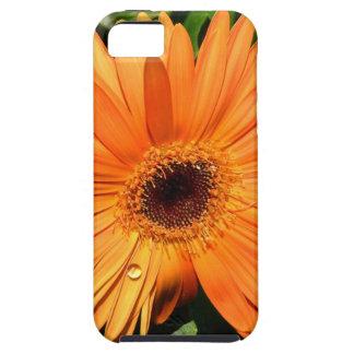 オレンジガーベラのデイジー iPhone SE/5/5s ケース
