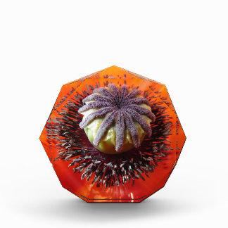 オレンジケシの中心 表彰盾