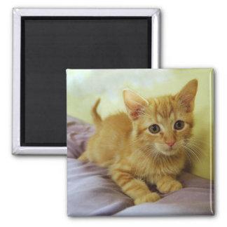 オレンジストライプのな虎猫の子ネコの磁石 マグネット