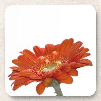 オレンジデイジーのガーベラの花 コースター
