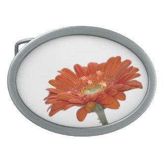 オレンジデイジーのガーベラの花 卵形バックル