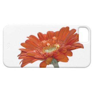 オレンジデイジーのガーベラの花 iPhone SE/5/5s ケース