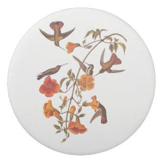 オレンジトランペット花を持つマングローブのハチドリ 消しゴム