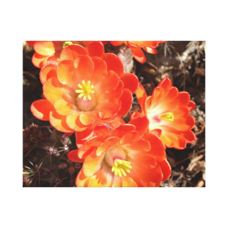 オレンジハリネズミサボテンの花のキャンバス キャンバスプリント