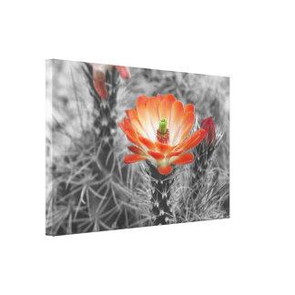 オレンジハリネズミサボテンの花 キャンバスプリント