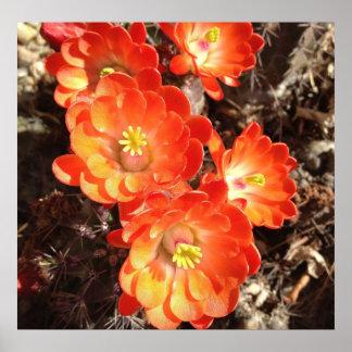 オレンジハリネズミサボテンの花 ポスター