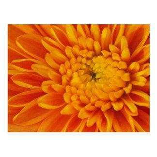 オレンジミイラの花柄の郵便はがき ポストカード