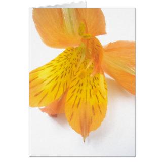 オレンジユリ カード