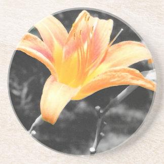 オレンジワスレグサの写真 コースター