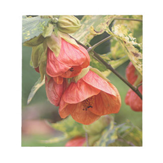 オレンジ中国のなランタンのアブチロン属の花 ノートパッド
