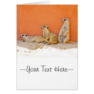 オレンジ壁のMeerkats カード