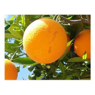 オレンジ木-スペインの郵便はがき ポストカード