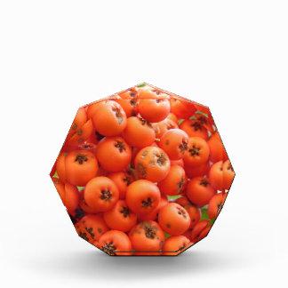 オレンジ果実 表彰盾
