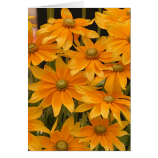 オレンジ栄光 カード