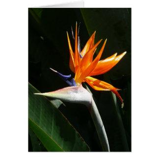オレンジ熱帯花極楽鳥 カード