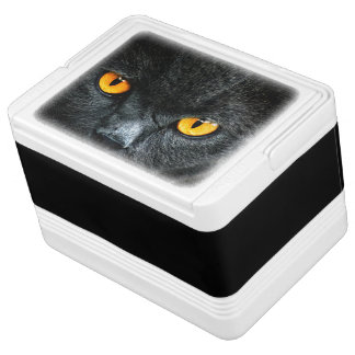 オレンジ目を持つ灰色猫 IGLOOクーラーボックス