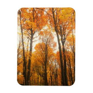 オレンジ秋の森林 マグネット