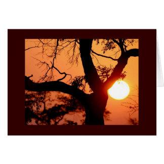 オレンジ空 カード