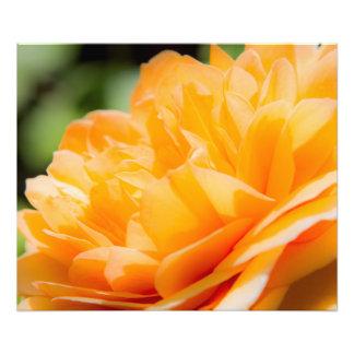 オレンジ花びら フォトプリント