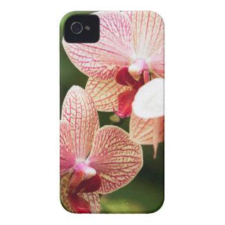オレンジ蘭の雑種、南アフリカ共和国 Case-Mate iPhone 4 ケース