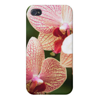 オレンジ蘭の雑種、南アフリカ共和国 iPhone 4 COVER