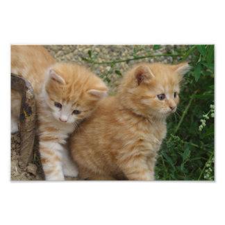 オレンジ虎猫の兄弟姉妹 フォトプリント