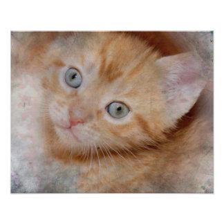 オレンジ虎猫の子ネコのプリント フォトプリント