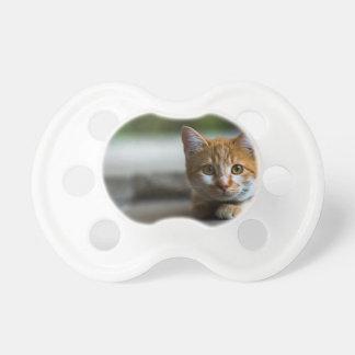 オレンジ虎猫の子ネコ おしゃぶり