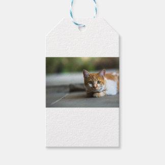 オレンジ虎猫の子ネコ ギフトタグ
