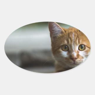 オレンジ虎猫の子ネコ 楕円形シール