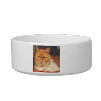 オレンジ虎猫 猫のえさ皿