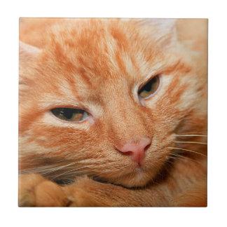 オレンジ虎猫CATのセラミックタイル タイル