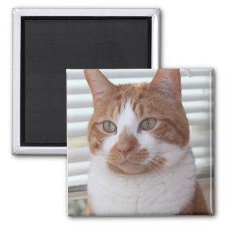 オレンジ虎猫CATの磁石 マグネット