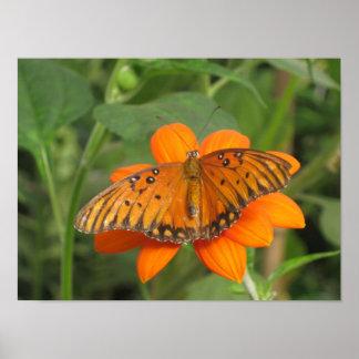 オレンジ蝶 ポスター